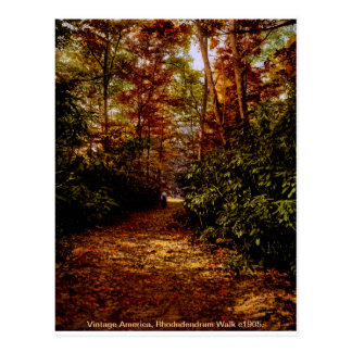 Rhodedendrum Walk, vintage USA postcard Postcard