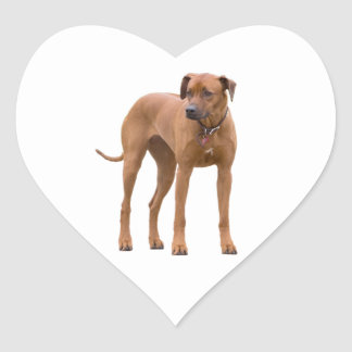 Rhodesian Ridgeback dog beautiful photo, gift Heart Sticker