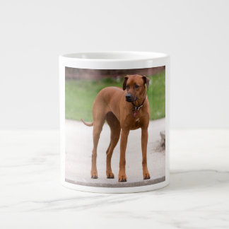 Rhodesian Ridgeback dog beautiful photo, gift Large Coffee Mug