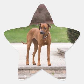 Rhodesian Ridgeback dog beautiful photo, gift Star Sticker