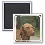 Rhodesian Ridgeback Dog Magnet Refrigerator Magnet