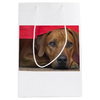 rhodesian-ridgeback.png medium gift bag