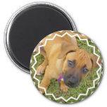 Rhodesian Ridgeback Puppies Magnet