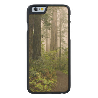 Rhododendron blooming among the Coast Redwoods / Carved Maple iPhone 6 Case