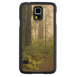 Rhododendron blooming among the Coast Redwoods / Maple Galaxy S5 Case