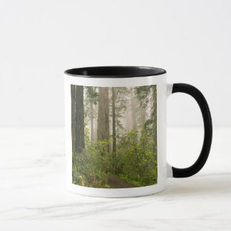 Rhododendron blooming among the Coast Redwoods / Mug