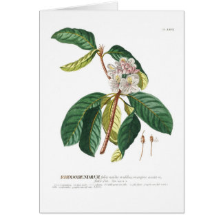 Rhododendron Card