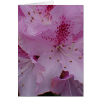Rhododendron close up card