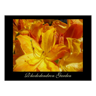 Rhododendron Flowers art prints Sisters Garden Print