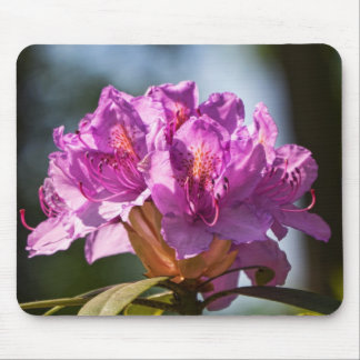 Rhododendron in der Sonne. Mouse Pad
