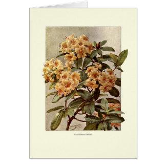 Rhododendron var Minerva Card