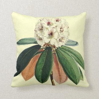 Rhododendron vintage botanical illustration throw pillows