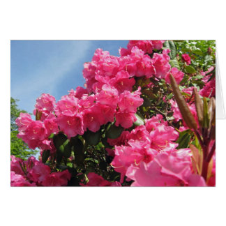 Rhododendrons - Vancouver, BC Note Card