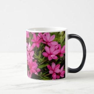 Rhodohypoxis / Red Star / Rosy Posy Morphing Mug