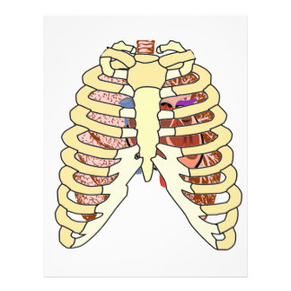 Rib Cage Lungs & Heart 21.5 Cm X 28 Cm Flyer