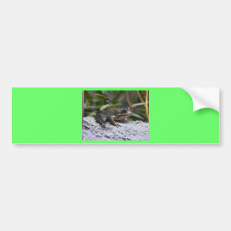 ribbit bumper sticker