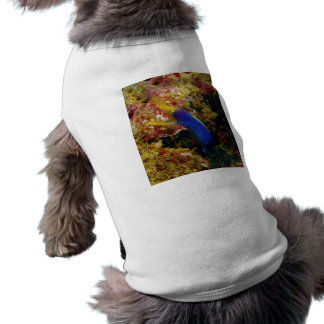 Ribbon Eel Rhinomuraena Quaesita Bernis Eel Sleeveless Dog Shirt