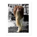 Ribbons & Bows Show Horse Postcard