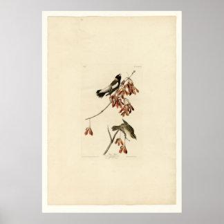 Rice Bird Poster