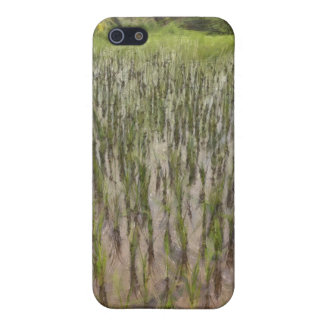 Rice fields and water case for the iPhone 5