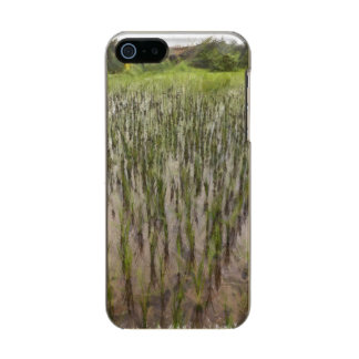 Rice fields and water incipio feather® shine iPhone 5 case