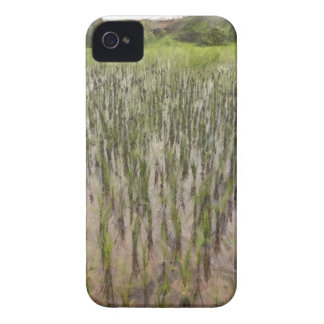 Rice fields and water iPhone 4 Case-Mate case