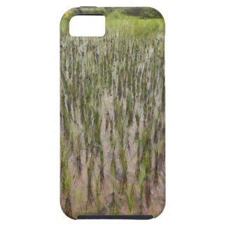 Rice fields and water iPhone 5 case