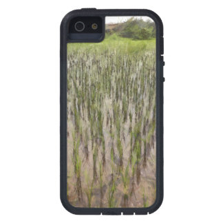 Rice fields and water iPhone 5 cases