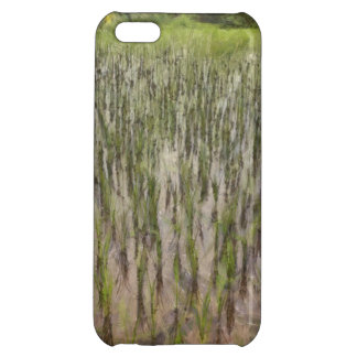 Rice fields and water iPhone 5C case