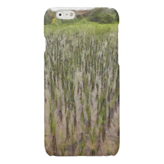 Rice fields and water iPhone 6 plus case