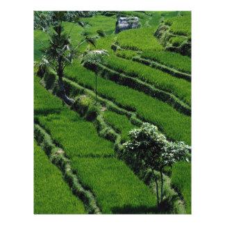 Rice paddy fields, Bali, Indonesia 21.5 Cm X 28 Cm Flyer