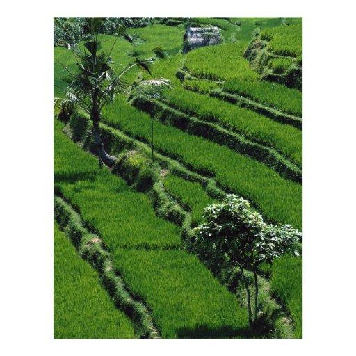 Rice paddy fields, Bali, Indonesia Personalized Flyer