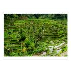 Rice terrace in Bali Postcard