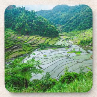 Rice terrace landscape, Philippines Drink Coaster