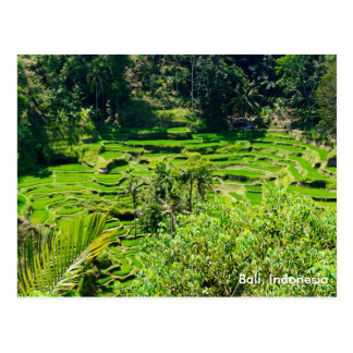 Rice Terraces of Bali, Indonesia Postcard