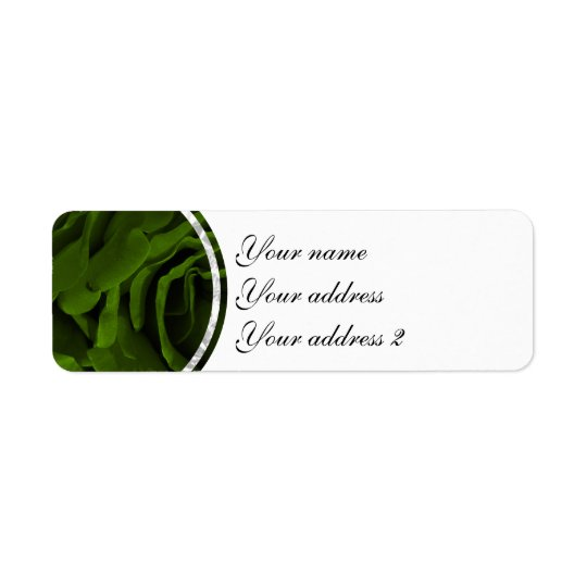 Rich olive green velvety roses flower photo