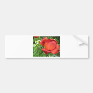 Rich red tulip and sweet white bumper sticker