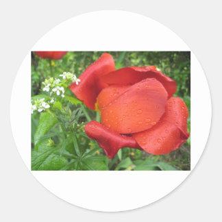 Rich red tulip and sweet white round sticker
