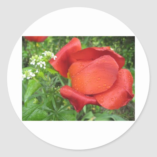 Rich red tulip and sweet white stickers