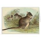 Richard Lydekker - Brush-Tailed Rat-Kangaroo Card