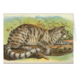Richard Lydekker - Colocolo Greeting Cards