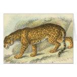 Richard Lydekker - Jaguar Greeting Cards