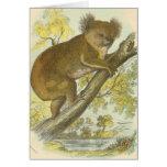 Richard Lydekker - Koala Greeting Cards
