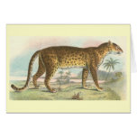 Richard Lydekker - Leopard Greeting Card