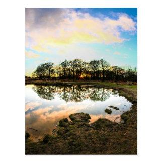 Richmond Park, London Postcard