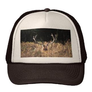 Richmond Park stag London Mesh Hat