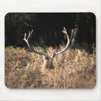 Richmond Park stag, London Mouse Pad
