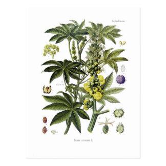 Ricinus communis (Castor Oil Plant) Postcard