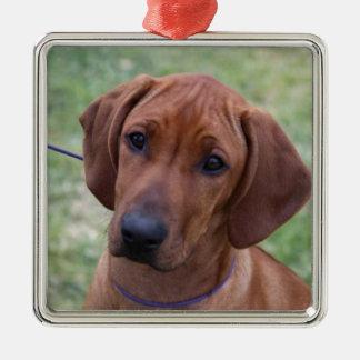 Ridgeback Puppy Christmas Ornament