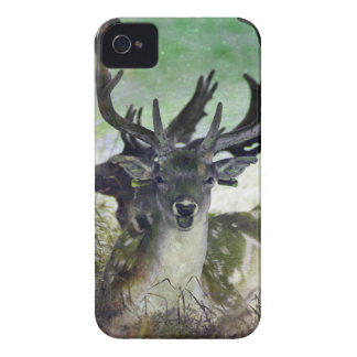 Ridiculously Photogenic Deer Case-Mate iPhone 4 Case